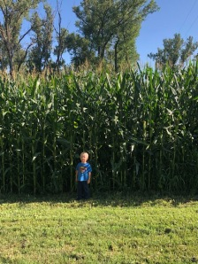 Ben in the Corn Jul2019